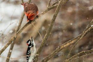 Controlling bird